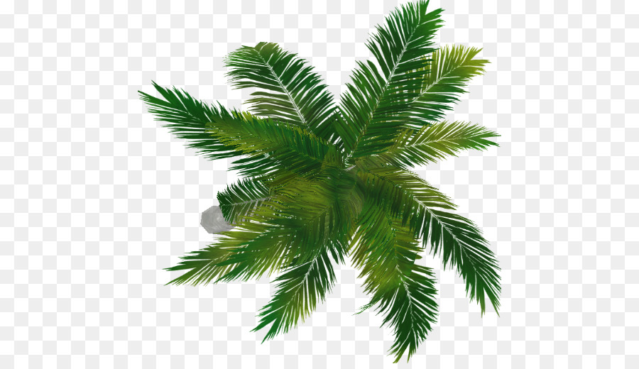 Dead Palm Tree Png - Fir Arecaceae Evergreen Spruce Pine - palm top png download - 512 ...
