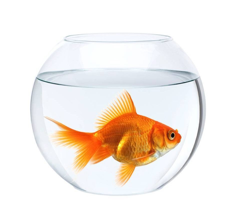 Empty Fish Tank Png Black And White Transparent Images 5726 Pngio