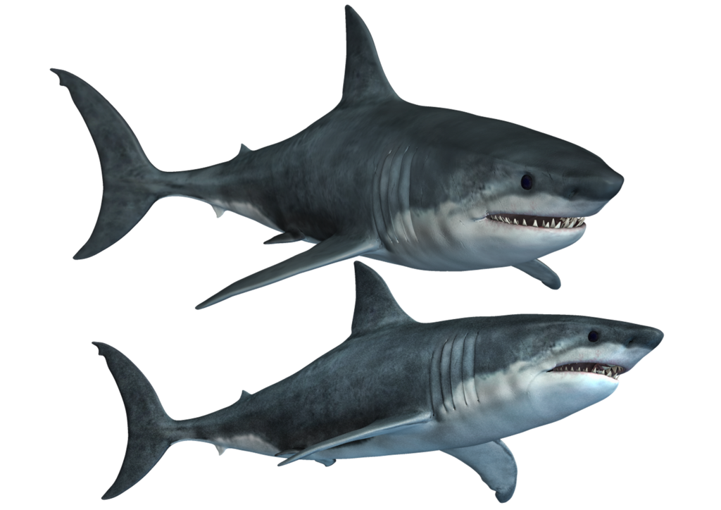 Requiem Shark Png - Fish,Shark,Great white shark,Tiger shark,Requiem shark,Fish,Fin ...