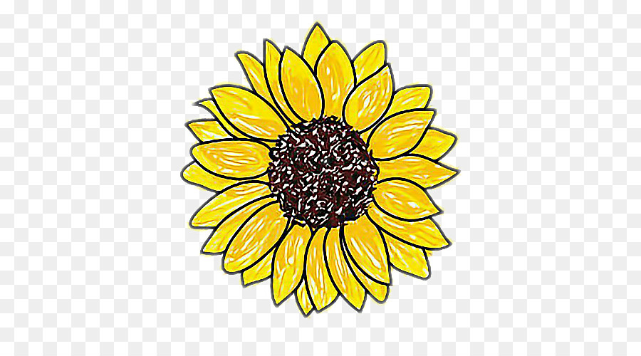 Sunflower Drawing Png - Floral Flower Background