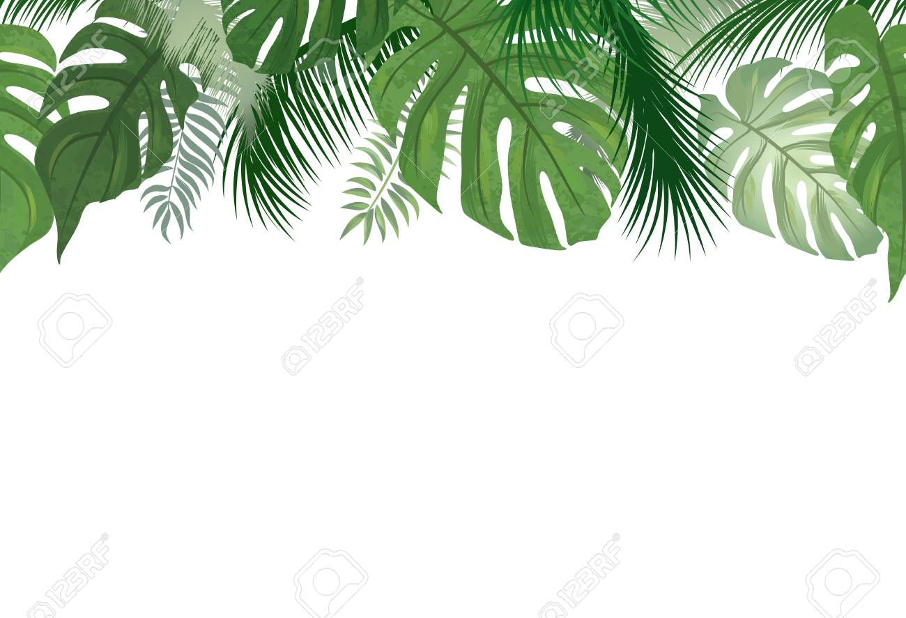 Palm Leaves Border Free Palm Leaves Border Png Transparent Images 50940 Pngio Please to search on seekpng.com. palm leaves border free palm leaves border png transparent images 50940 pngio