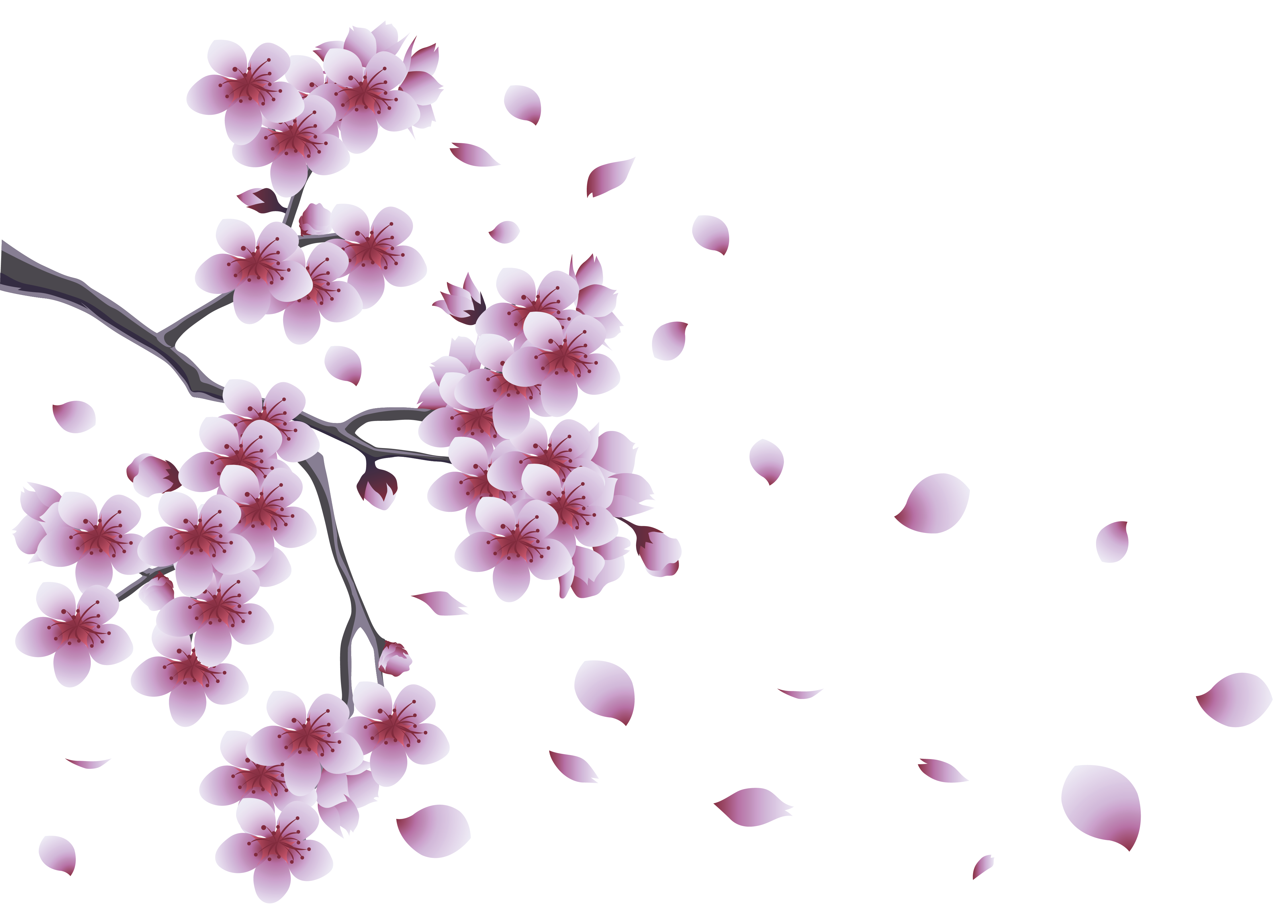 Png Tree With White And Pink Flowers - Flower branch png transparent stock - RR collections