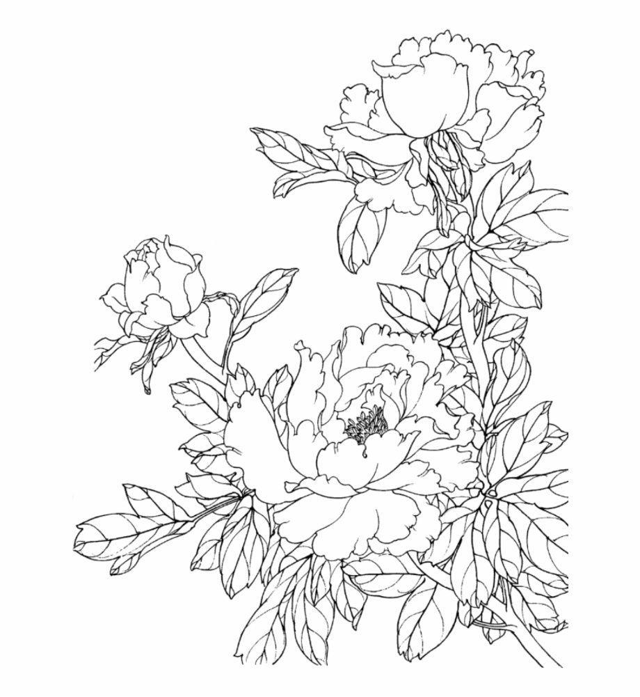 Flower Drawing Png - flower #flowers #draw #drawing #scrapbook #scrapbooking - 牡丹 ...