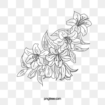 Flower Line Drawing Png Images Vector 1146932 Png Images Pngio