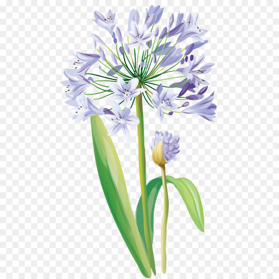 Flower Plant Agapanthus Striped Squill P #2590499 - PNG ...