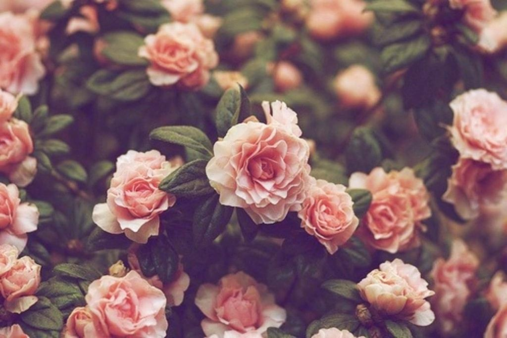 Flower Wallpapers Vintage Flowers Wallpa 1157272 Png Images Pngio