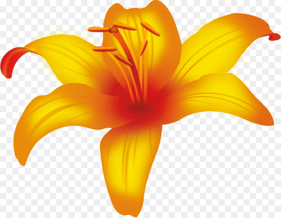 Yellow Daylily Png - Flowers Clipart Background png download - 1200*932 - Free ...