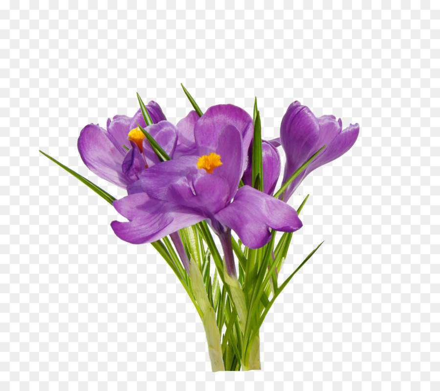 Spring Crocus Png - Flowers Clipart Background png download - 800*800 - Free ...