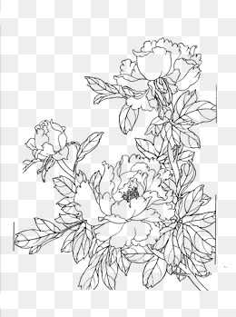 Download Flower Line Drawing Png Png Gif Base