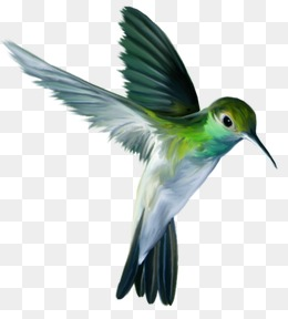 Flying Bird, Birds, Green, Fly PNG Image #23457 - PNG Images