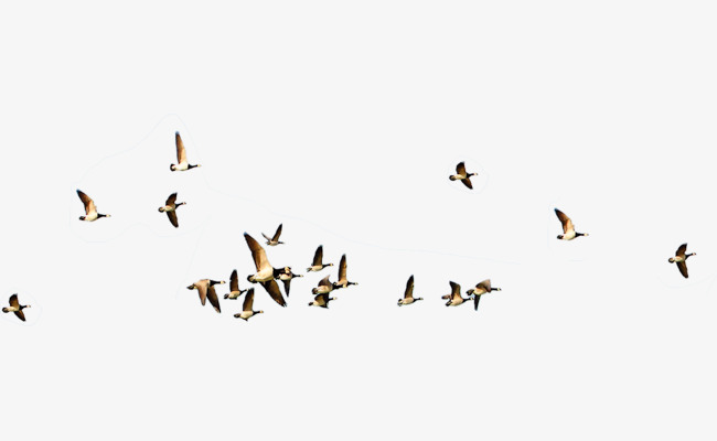 Bird Flying Png & Free Bird Flying png Transparent Images
