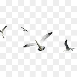 Flying Birds Fly Birds Flying Clipart 34756 Png Images Pngio