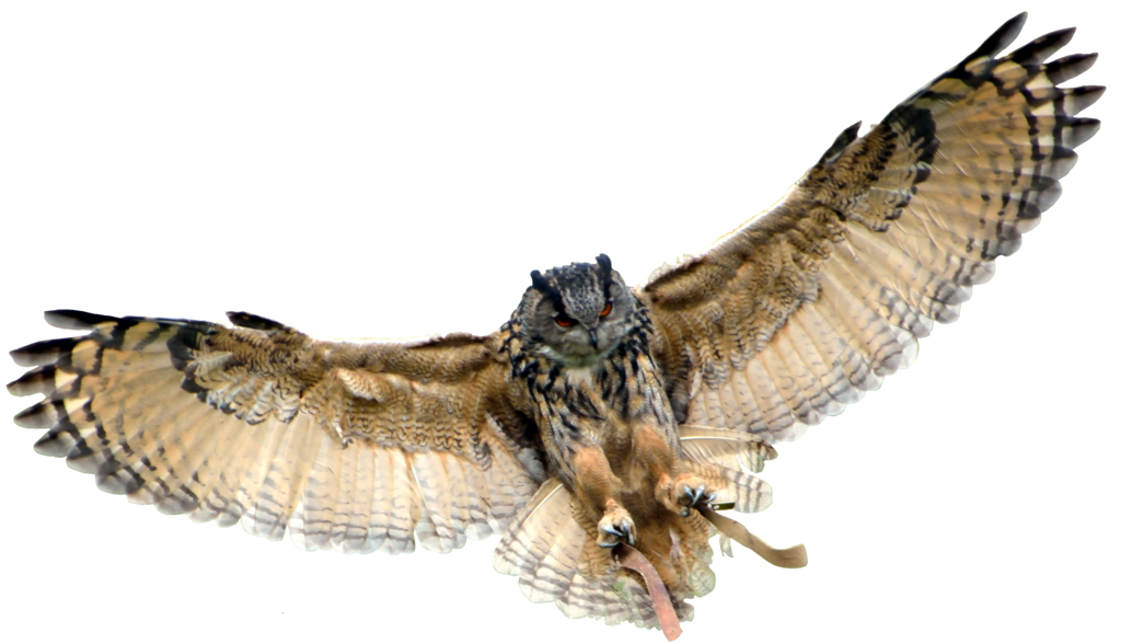 Flying Owl Png - Flying Owl | PNG All