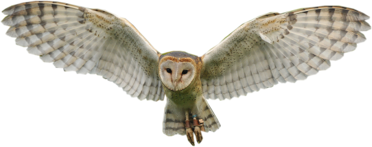 Flying Owl Png - Flying Owl PNG | PNG All
