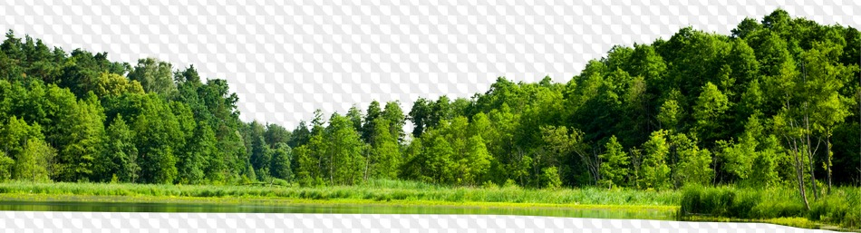 Background Forest Png - Forest Background Png (110+ images in Collection) Page 1