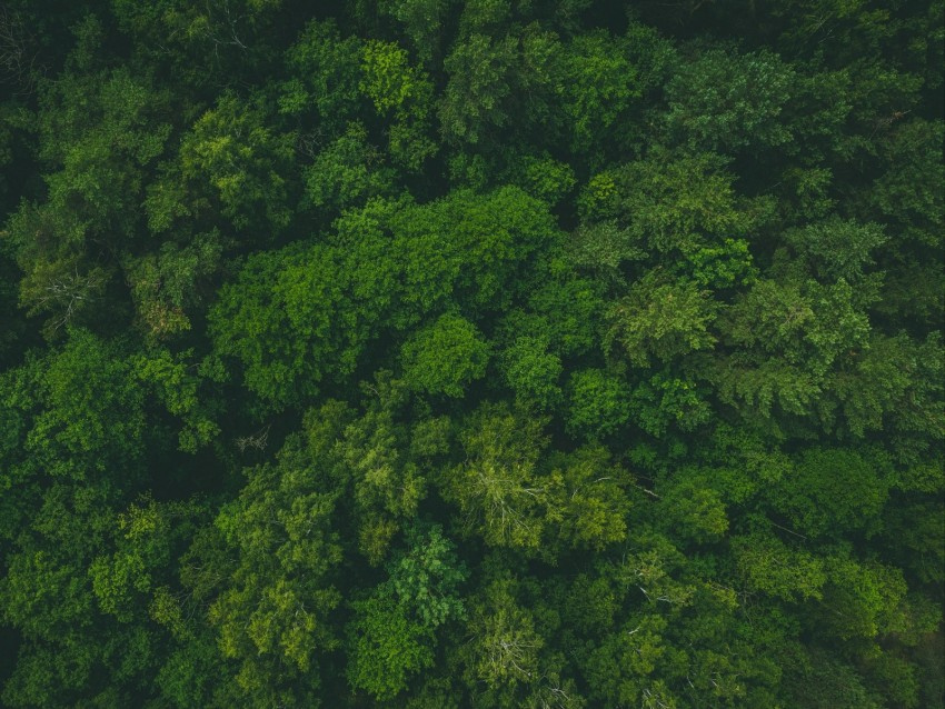 Forest Tree Tops Png - forest, green, aerial view, trees, treetops background | TOPpng