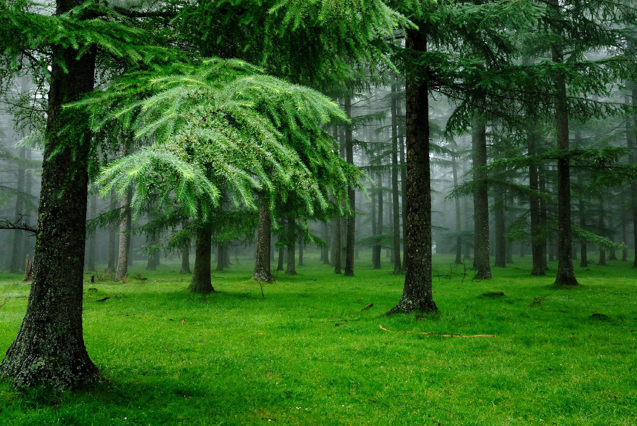 Background Forest Png - Forest PNG HD Images Transparent Forest HD Images.PNG Images ...