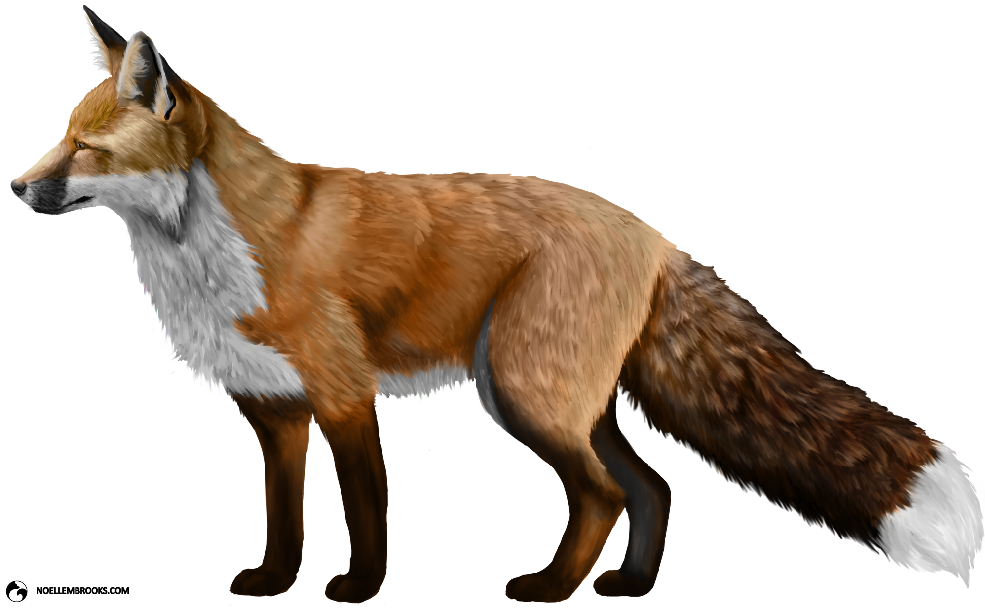 Fox Png - Fox PNG Photos