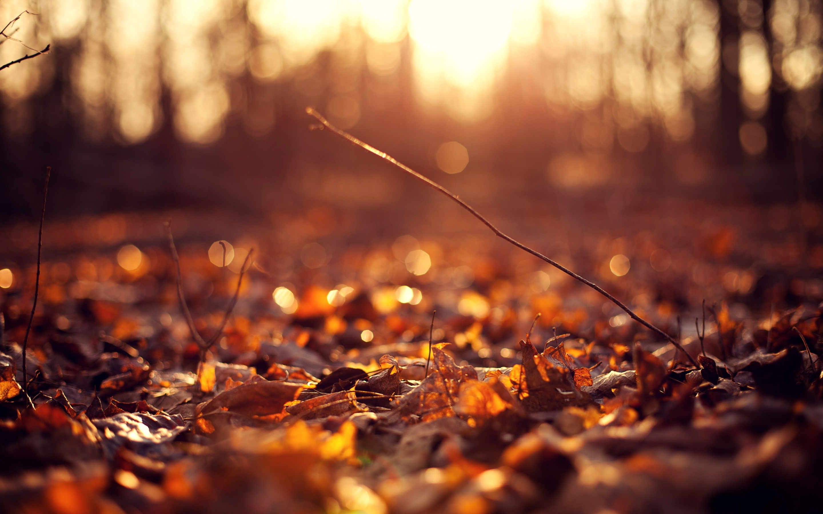 Autumn Sunsets Png Backgrounds - Free Autumn Leaves, Download Free Clip Art, Free Clip Art on ...