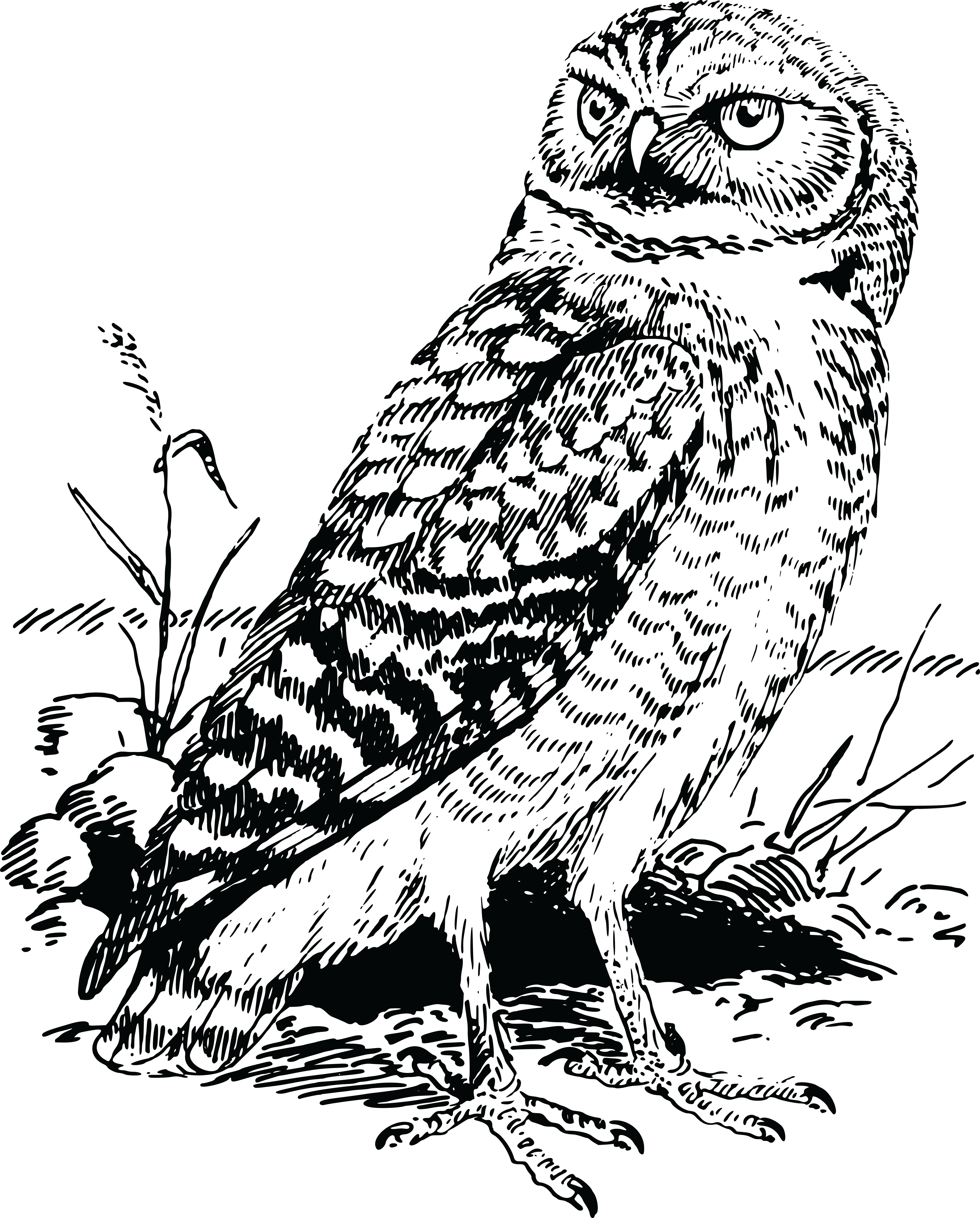 Owl Png Free Black And White Amp Free Owl Black And White