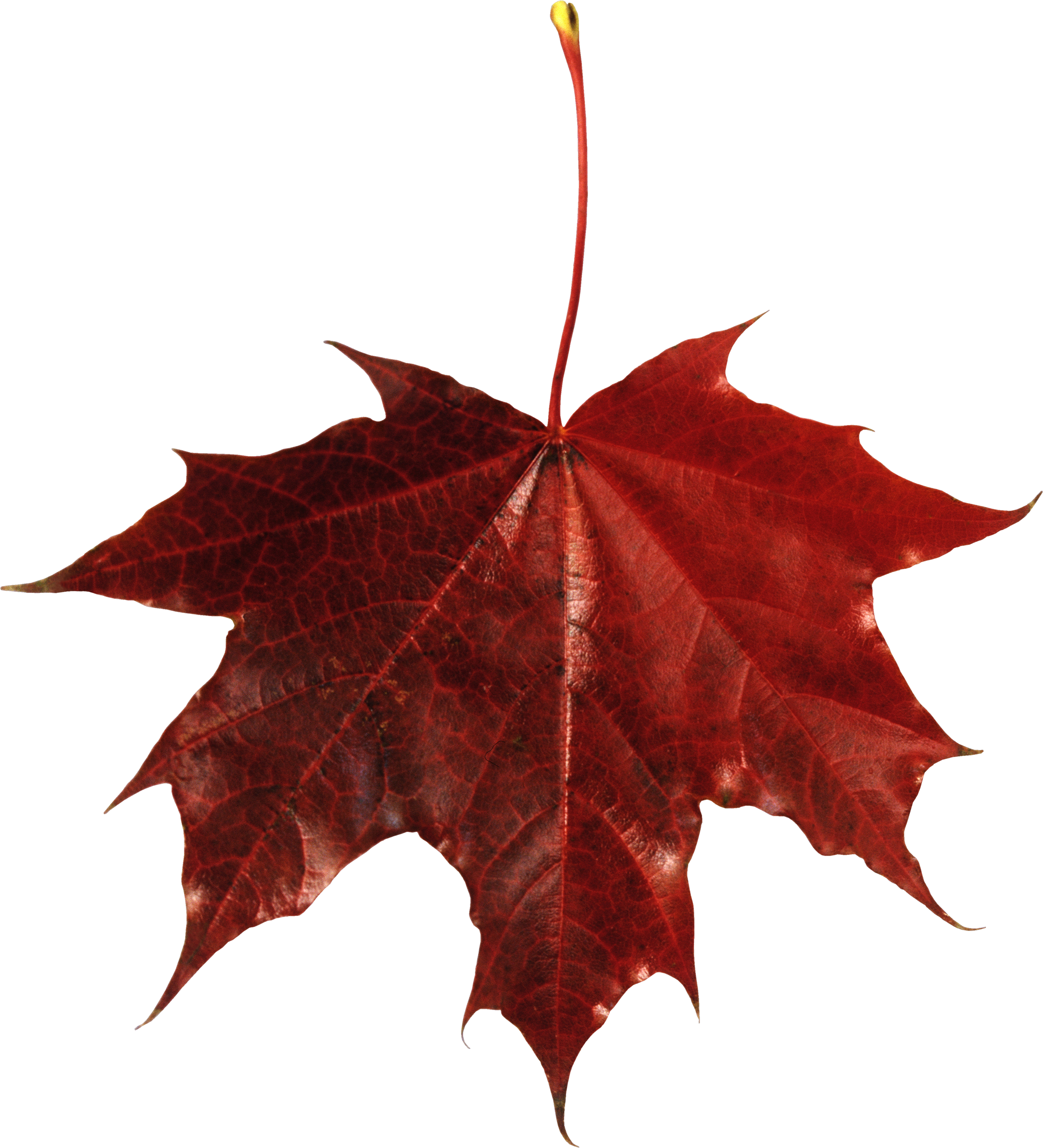 Free Fall Png - Free Falling Leaves Download Vector Png ?