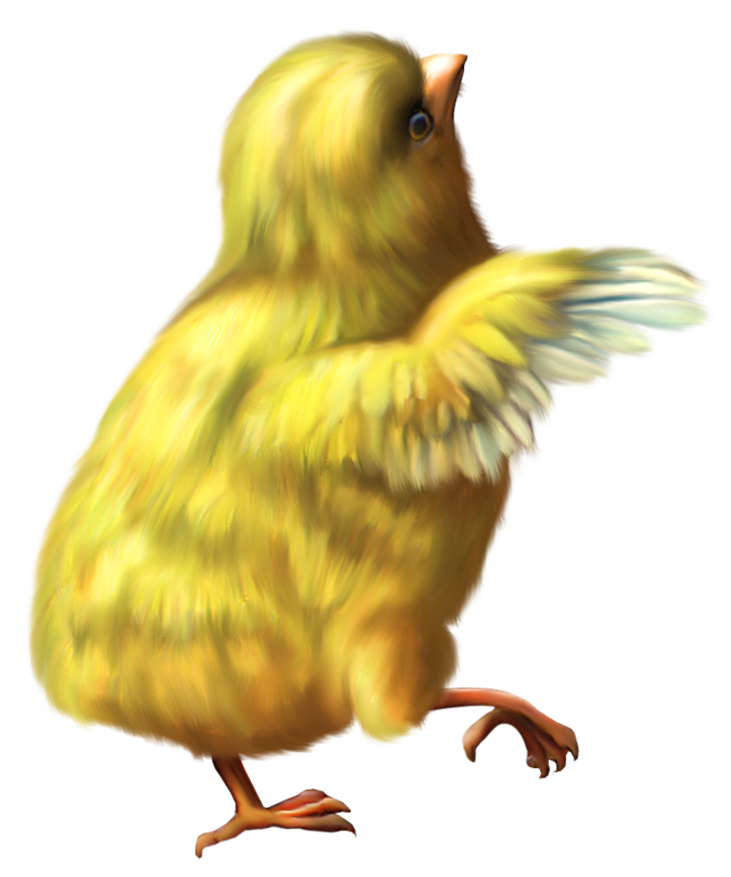 Yellow Chicken Png - Free Icons Png: Yellow Baby Chicken Png