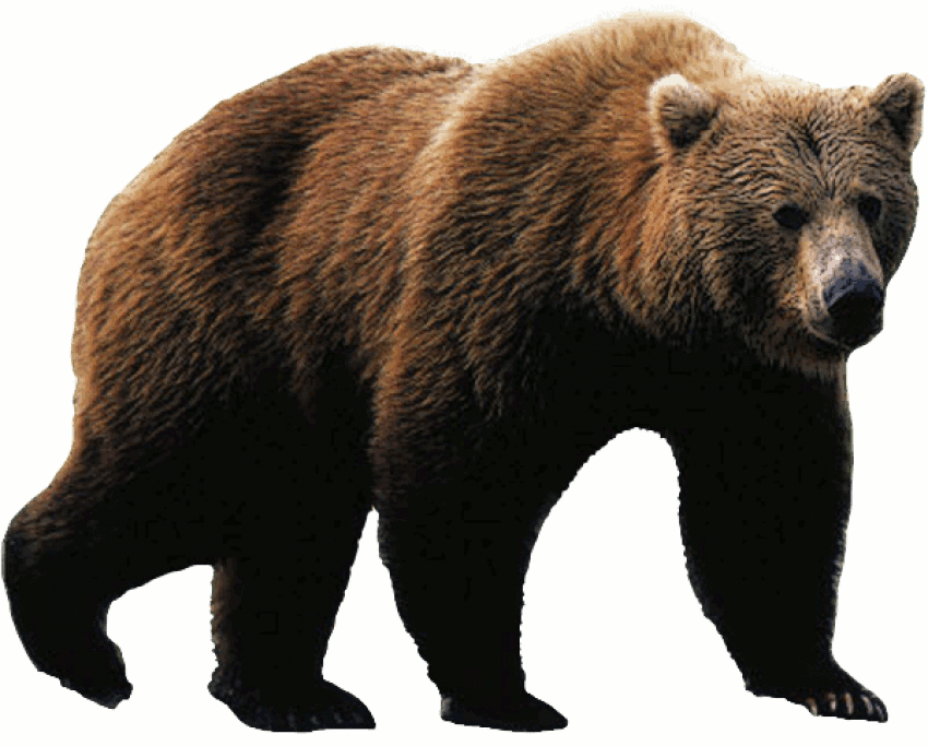 Bear Png - free png bear PNG images transparent