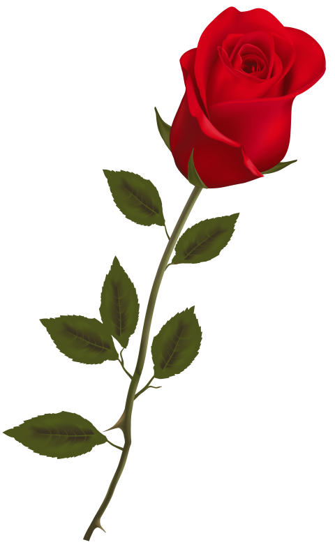 Free Rose Png Images Transparent Images 4151 Pngio