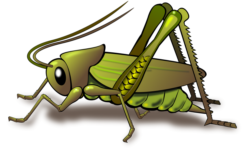 Cricket Insect Png - free png cricket insect clipart PNG images transparent