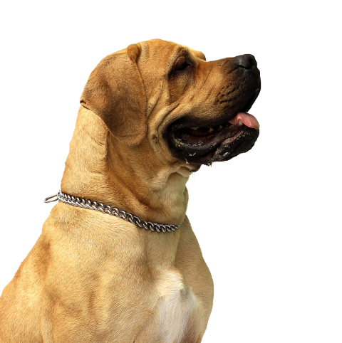Dog Png - free png dog PNG images transparent