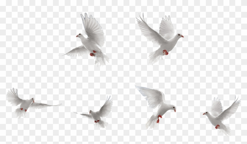 Dove Flying Png - Free Png Download Dove Png Images Background Png Images - White ...