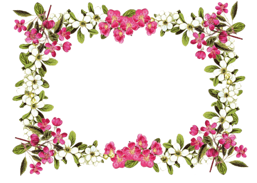 flowers borders png transparent images 1097 pngio