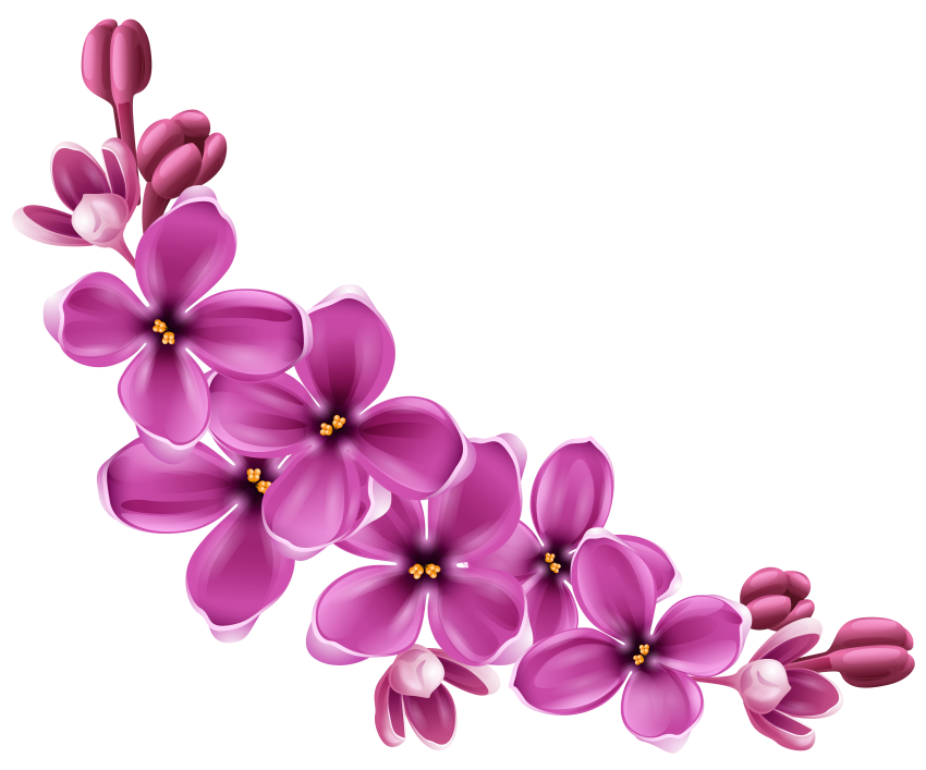 Flowers Png & Free Flowers.png Transparent Images #46