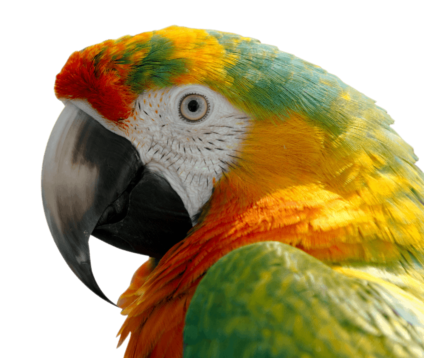 Macaw Png - free png Macaw PNG images transparent