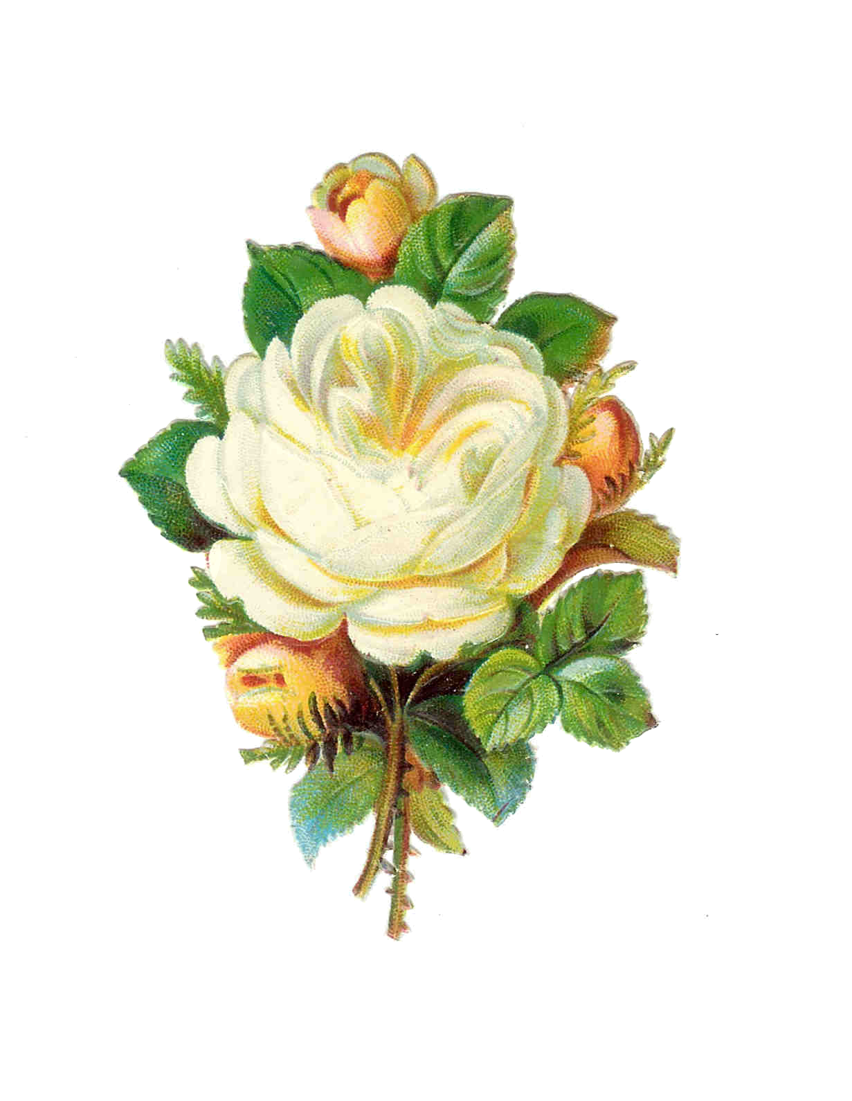 Victorian Rose Png - Free Victorian Rose Pictures, Download F #266631 - PNG Images - PNGio