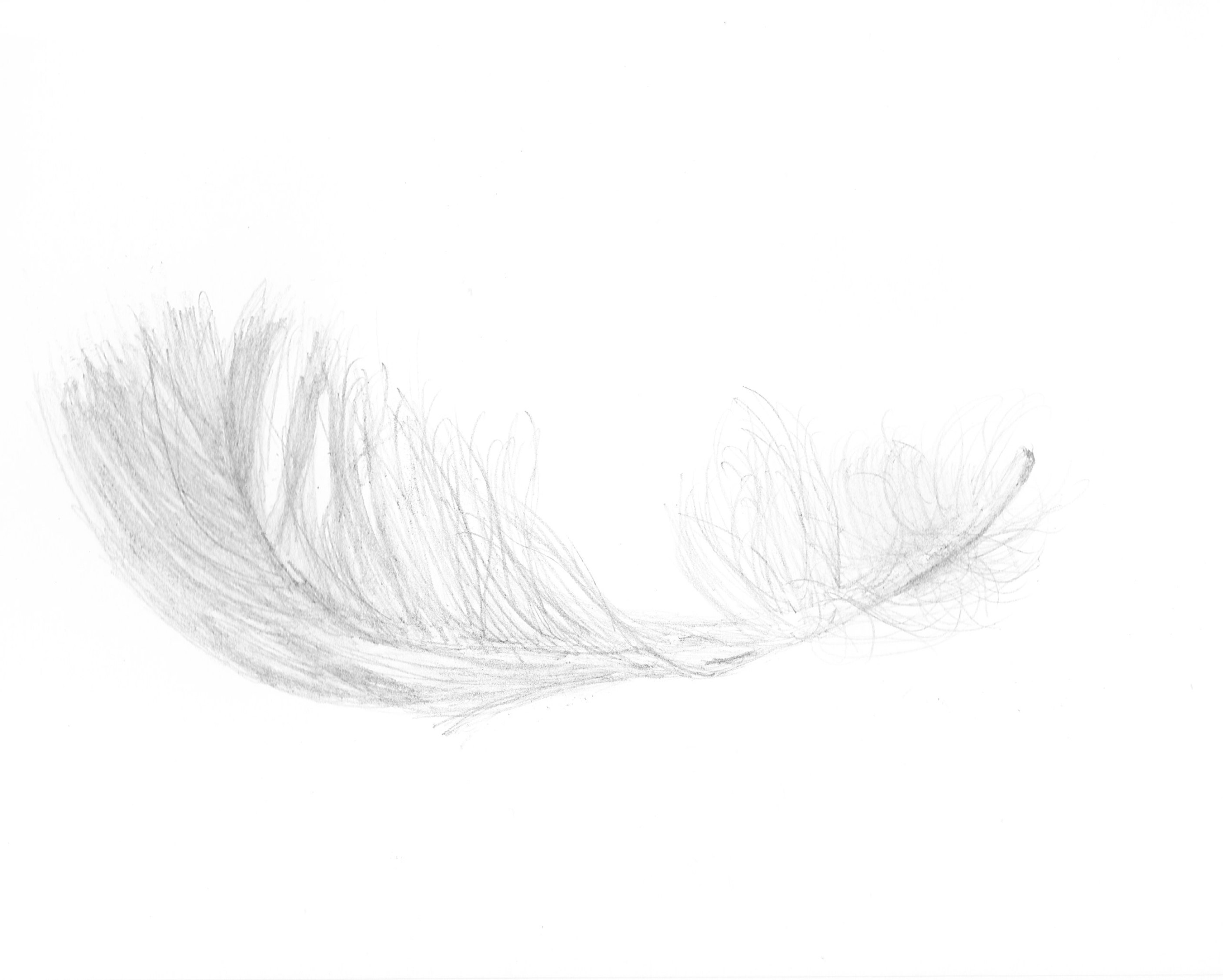 Down Feather Png - Free White Feathers Png, Download Free Clip Art, Free Clip Art on ...