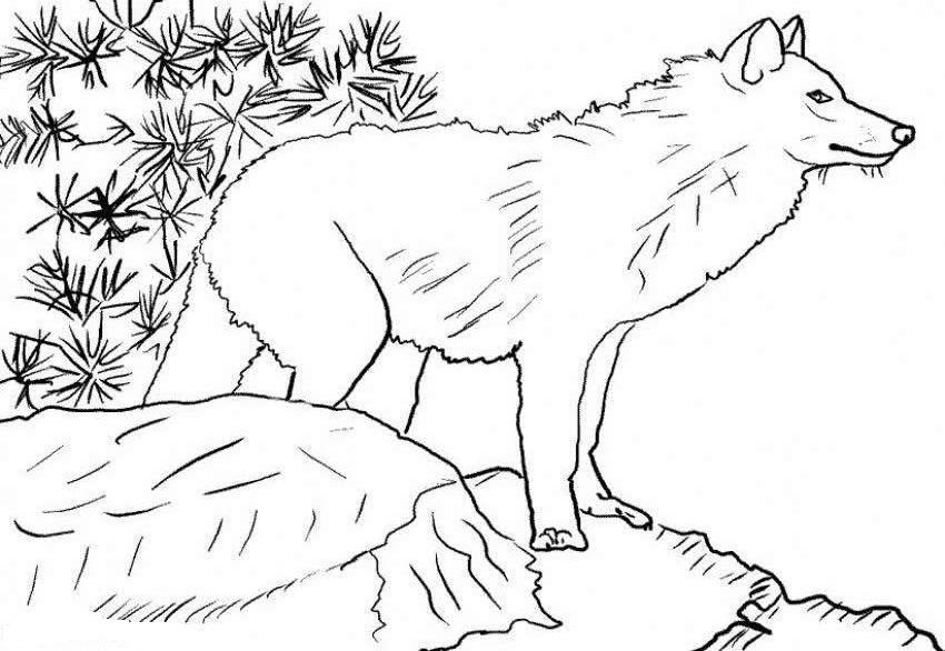 Free Wolf Coloring Pages Coloring Page 2597527 Png Images Pngio