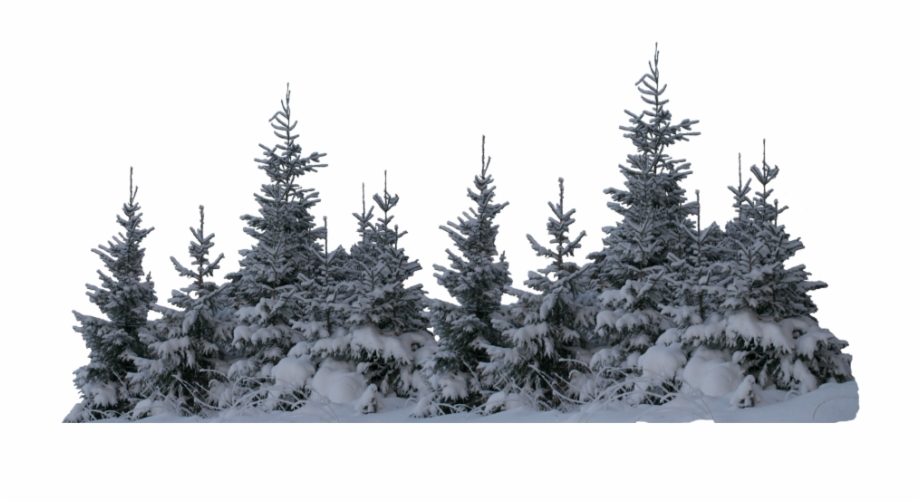 Winter Forest Png Free Winter Forest Png Transparent Images 88583 Pngio Download 83,895 forest free vectors. winter forest png transparent