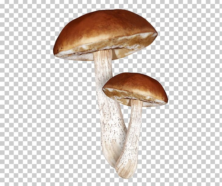 Clitocybe Nuda Png - Fungus Edible Mushroom Clitocybe Nuda Lepista PNG, Clipart ...