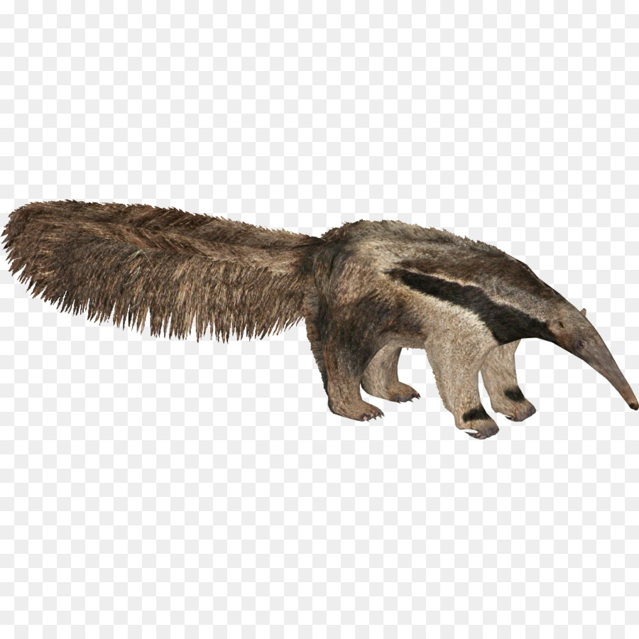 Anteater Png - Giant anteater Zoo Tycoon 2 Prairie dog - anteater png download ...