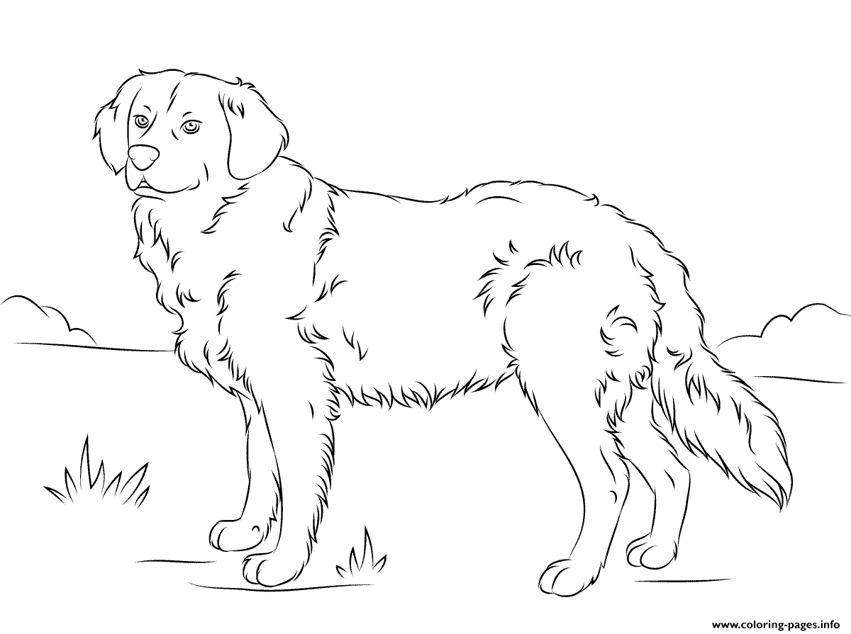 Street Dog coloring page | Free Printable Coloring Pages | 895x1200