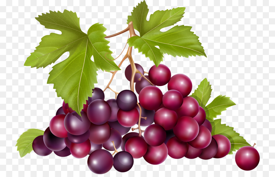Bunch Of Grapes Png - Grape Raceme Euclidean vector Fruit - a bunch of grapes png ...