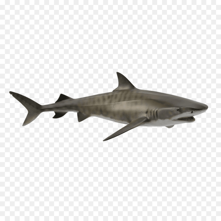 Requiem Shark Png - Great white shark Tiger shark Requiem sharks Squaliform sharks ...