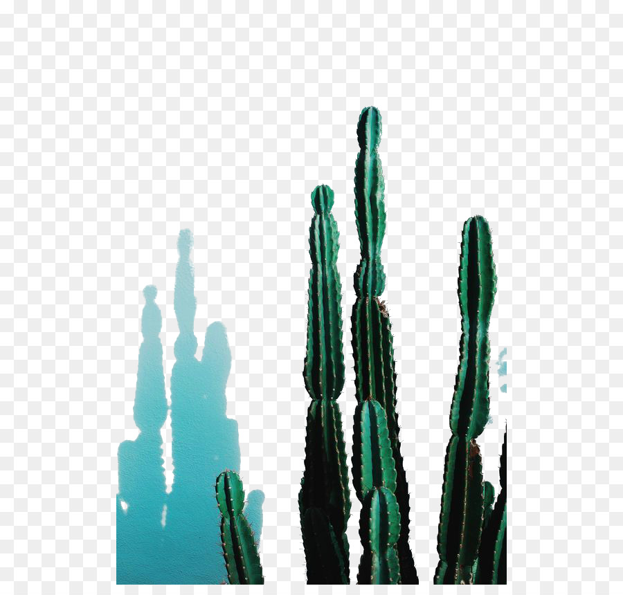 Echinopsis Png - Green Background Frame