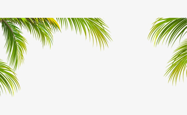 Coconut Border Png - Green coconut leaf border texture PNG clipart | free cliparts | UIHere