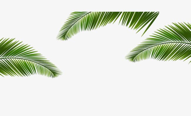 Coconut Border Png - Green Coconut Leaves Border Texture PNG, Clipart, Backgrounds ...