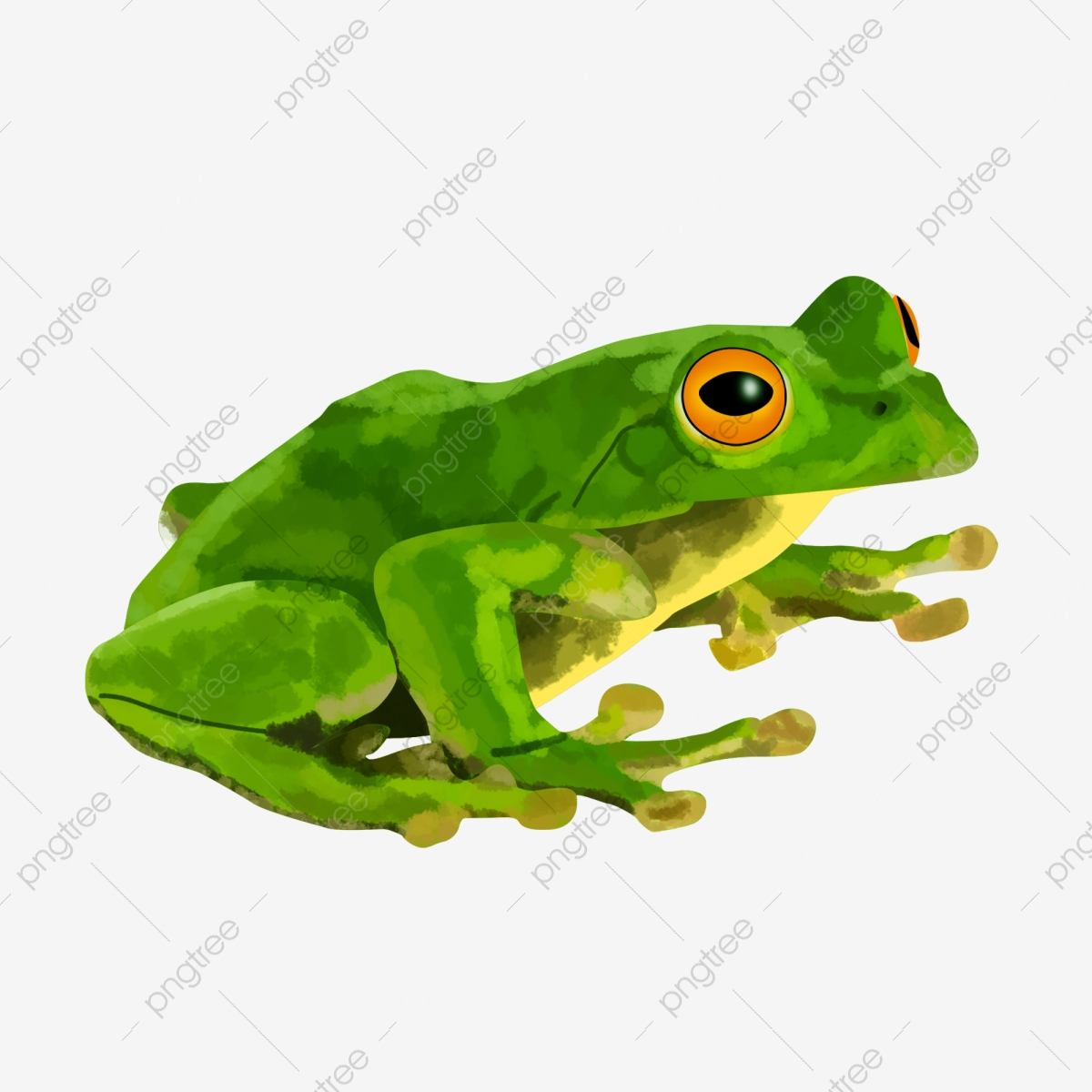 Shrub Frog Png - Green Frog, Frog, Toy, Green PNG Transparent Clipart Image and PSD ...