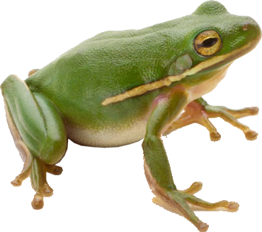 Frog Png - Green frog PNG