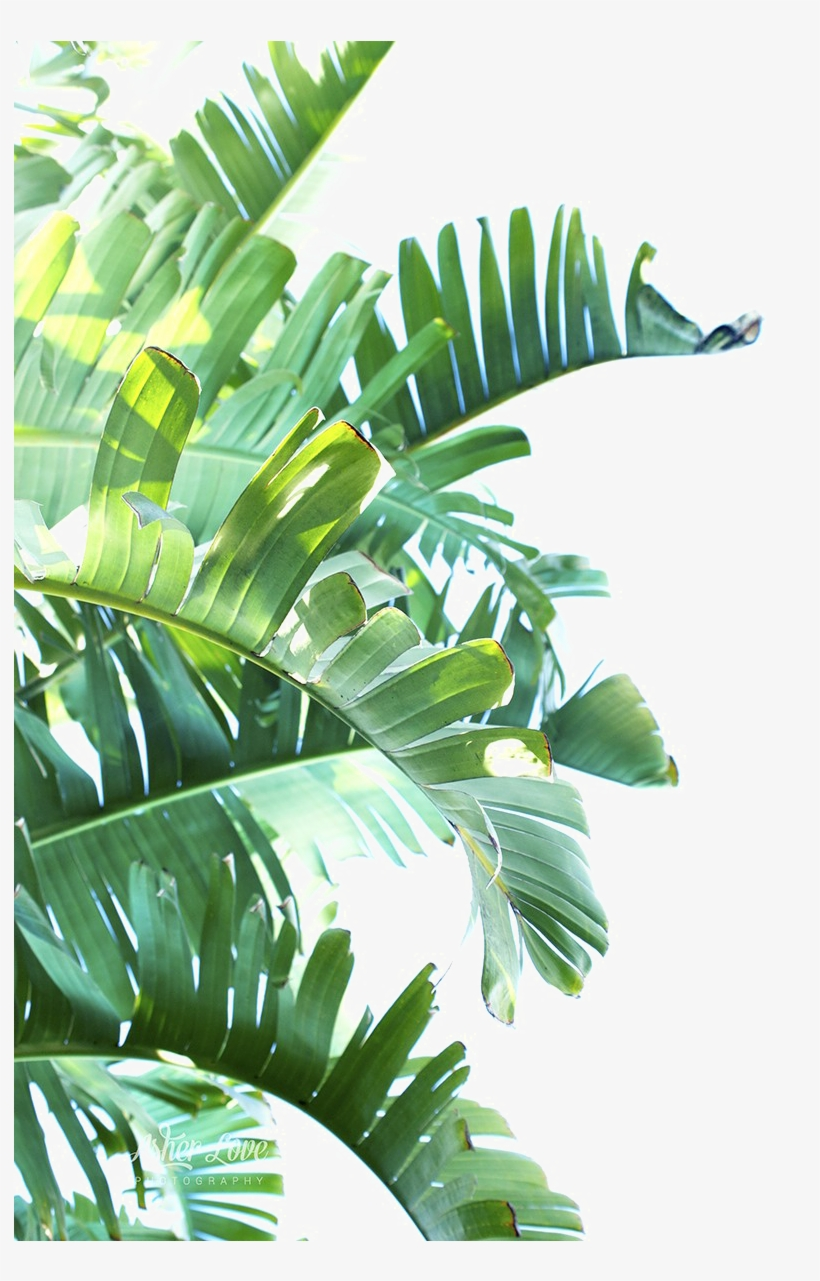 Tropical Leaves Png - Green Leaf Png Clipart - Tropical Leaves Png Transparent PNG ...