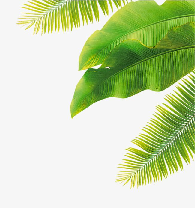 Green Leaves Thar Thar In 2019 Green 1174254 Png Images Pngio Download the perfect tropical leaves pictures. pngio com